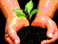 Margao green NGO plants 5029 trees