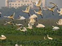 Studies find common factors in divergent habitats of migratory birds