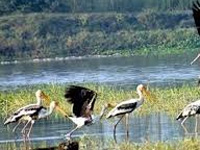Climate change clips wings of migratory birds