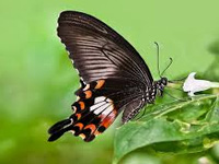 Rare butterflies sighted, snapped in Nilgiris