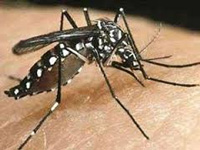 Dengue strikes early, 10 cases reported in three months