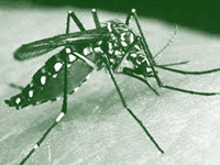 Cleanest city sees 91 dengue cases in six months