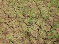Drought-like condition prevails in Kaliabor
