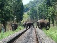 J'Khand forest dept begins elephant census in PTR, 8 sanctuaries