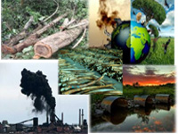 8% drop in environmental crimes