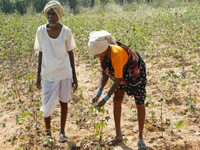 4 farmers commit suicide in 24 hrs