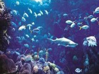 Climate change could shrink fish size by 30 per cent: Study