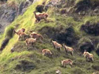 ZSI to record climate change impact on animals in Himalayas