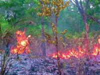 Major forest fire in Poonch, Doda