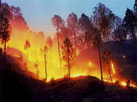 Battleground Uttarakhand: No forest cover in poll speak