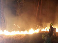 Forest department lacks funds to deal with jungle fires, observes CAG report