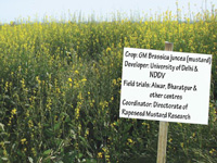 Commercial cultivation of GM mustard is harmful