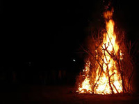 Green activists decry burning of live trees for Holika