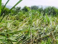 Crop loss due to Hudhud valued at Rs 24 cr