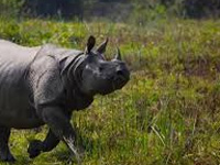 Cry for India, Bhutan joint patrol to curb poaching at Assam's Manas park