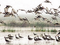 Chilika Lake fights for survival
