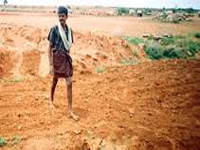 Relaxed tenancy norms cover 3000 farmers so far