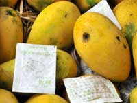 No check on artificial ripening of fruits, vegetables in Muktsar