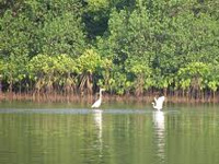 Kochi may get a mangrove heritage site