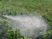 Heavy use of pesticides by encroachers on govt land along Ganga