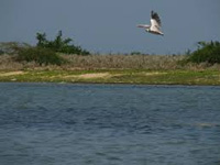 Pulicat fish landing centres construction began without adequate approval