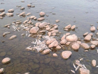 250kg fish found dead along creeks