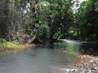 Pollution board to clean Jhalana forest rivulet