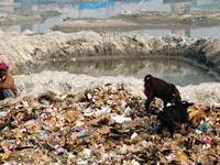 Waste disposal site in Sector 38 poses threat to surface, groundwater aquifers, says study