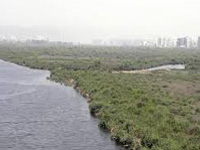 NGT show-cause notice to Centre, Haryana on Basai wetland