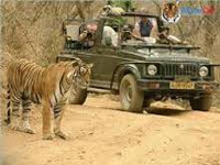 Now, Ranthambore opens for full day safari