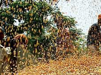 India eyes rabi grains to fight climate change