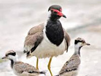 Suspected bird flu wipes out all painted storks at Gwalior zoo