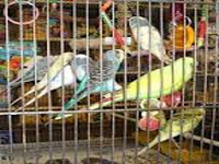 Birds can't be kept in cages: Delhi HC