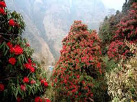 Uttrakhand spring flower blooms in mid-winter, experts worried