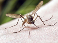 You may be nabbed if dengue breeds at home