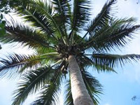 Green Brigade protests reclassification of coconut treee as grass