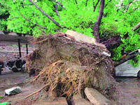 Gurgaon gets NGT notice against concrete around trees