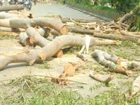 Tree felling on large scale in eco-sensitive Uttarkashi irks environmentalists