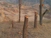 More than 50 trees cut on state government land in Tathawade
