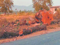 Warangal highway losing green cover