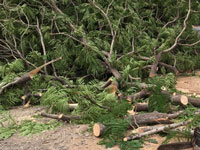 NGT asks panel to file report on 'illegal' tree felling in J&K