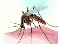 Dengue stalks northern fringes