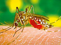 To strengthen fight against malaria, Maharashtra government to declare it notifiable disease