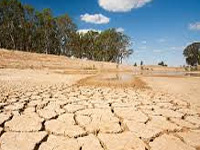 114 taluks drought-hit, more in line if dry spell persists: Minister