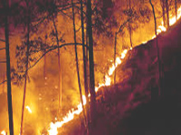 State battling encroachments & forest fires