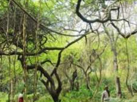 City forest to be developed at Sikanderpur Ghosi in next 4 years