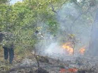 Rain saves forests from fire this summer