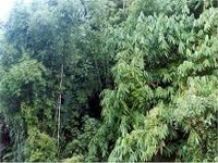 Tamil Nadu to evolve State Forest Policy soon