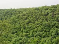 Nearly 5,000 Pakhal Wildlife Sanctuary trees face threat