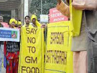 GM Mustard will have serious health & environmental impact: